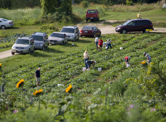 Customers in the field at The Tree Farm, the Pick-your-own vegetables Place
